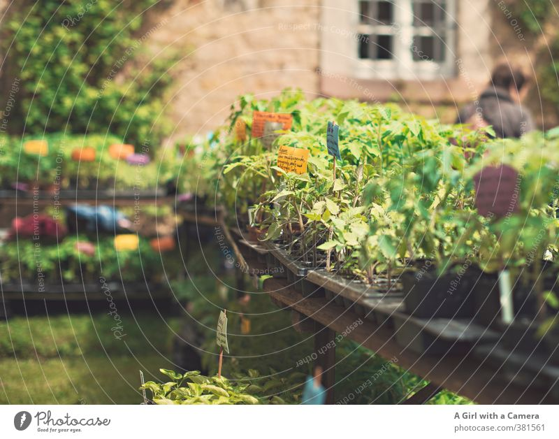 on display at the flower show Nature Plant Spring Beautiful weather Agricultural crop Pot plant Herbs and spices Vegetable garden Multicoloured Sell Table Offer