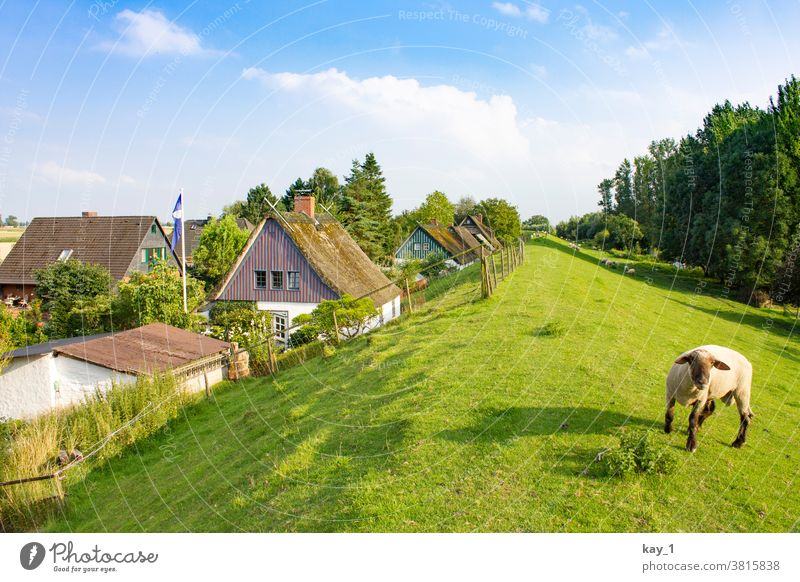 Path along the dike with trees on the wayside and houses on the horizon Nature Landscape Summer Exterior shot Tree Deserted Street Vantage point Calm Green
