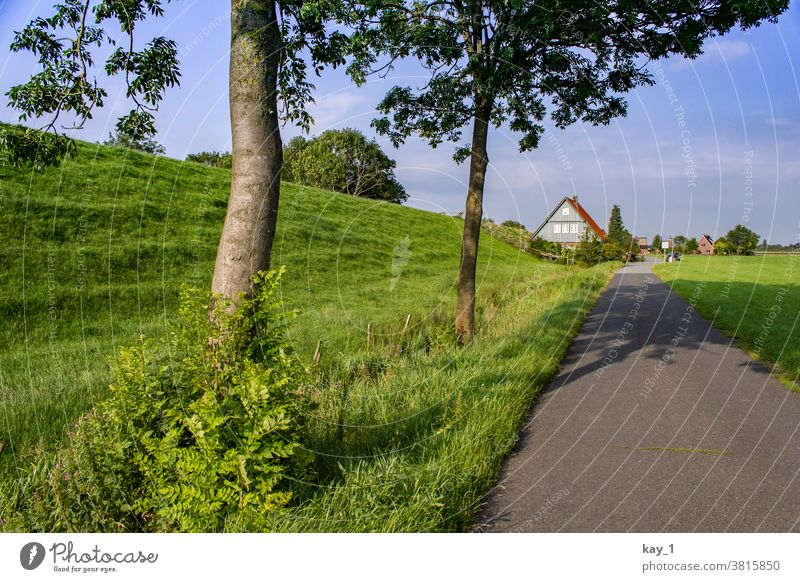 Path along the dike with trees on the wayside and houses on the horizon Lanes & trails off Nature Landscape Summer Exterior shot Tree Deserted Street