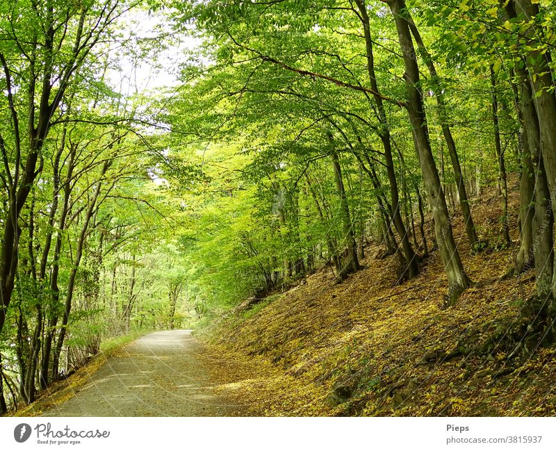 Under the canopy forest path deciduous trees Autumn leaves Target Hiking Experiencing nature National Park Eifel active recover vacation forest bath Healthy