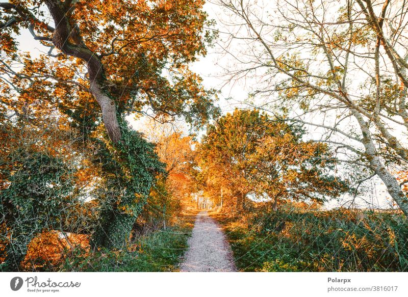 Hiking trail in the fall surounded by colorful trees branch orange pathway scenic colors light sun walkway footpath seasons hiking november woodland plant gold