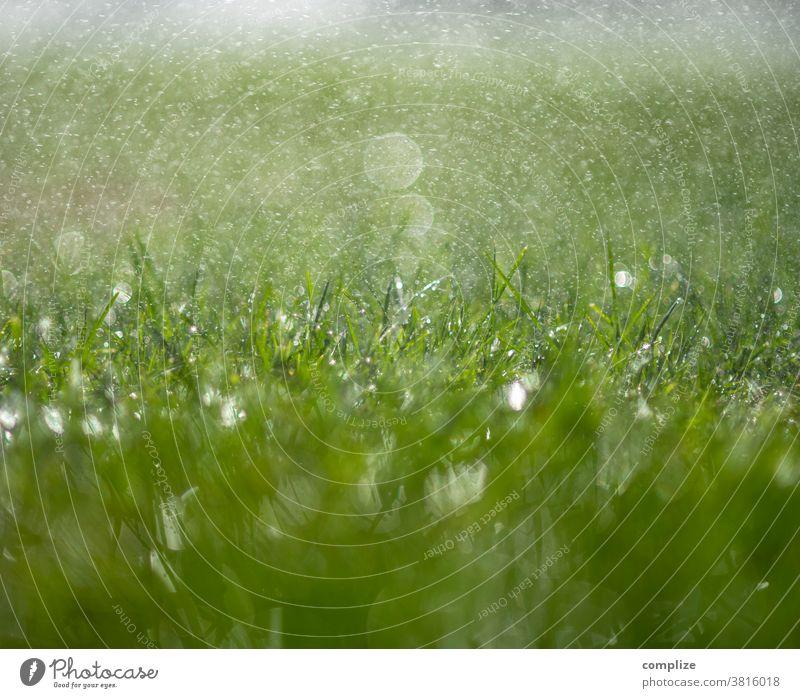 sprinklers Lawn sprinkler Grass Meadow Water Drop Wet wet Drops of water blade of grass macro soak Cast