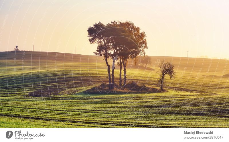 Rural landscape with trees in the middle of a field at colorful sunrise. nature rural sunset sky beautiful country peaceful agriculture countryside hill travel