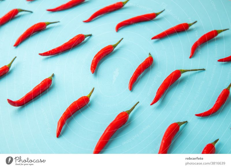 hot red chili, on blue background vegetable chilli fresh paprika food ingredient organic ripe isolated pepper white spice studio healthy mexico macro kitchen