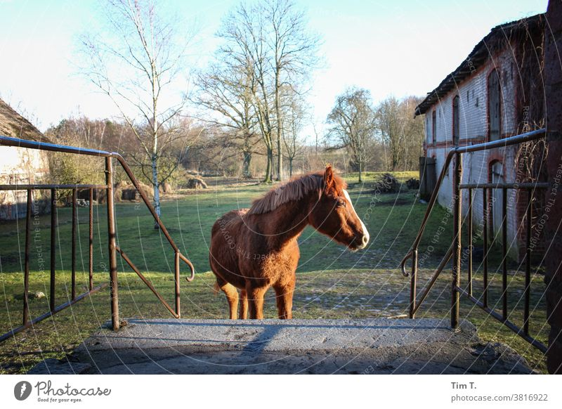 a horse stands in front of the house Horse Farm Exterior shot Animal Mane Brown Pelt Nature Mammal Grass Stairs Courtyard farm Ranch Poland poliska Pony pretty