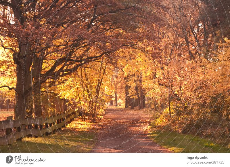 Nature Beautiful Plant Tree Relaxation Landscape Forest Environment Warmth Autumn Lanes & trails Natural Dream Gold Climate Illuminate