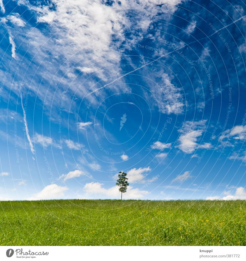 Sky Nature Blue Green Beautiful White Summer Plant Sun Tree Landscape Clouds Environment Meadow Grass Horizon