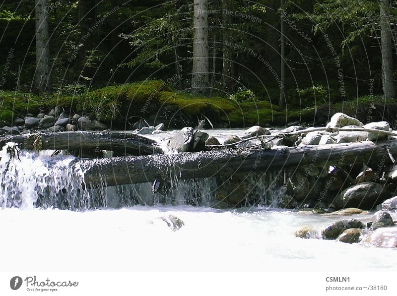 mountain stream Barrage Brook Mountain stream Water Wild Water