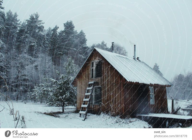 A small wooden building (bathhouse) with a smoking chimney in the village against the background of a pine forest during a snowfall. Rural landscape in snowy weather.