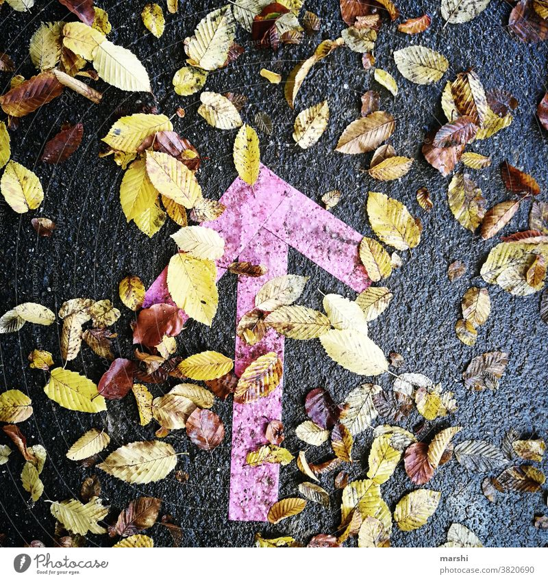Fall 2020 | this way Arrow signposts Autumn corona gap off pink leaves Autumnal Nature out keep sb./sth. apart Distance rule detachment arrowhead