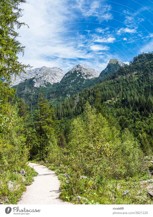Hiking trail in Klausbachtal in the Berchtesgadener Land hiking trail Berchtesgaden Country Bavaria Alps mountain Tree Forest Landscape Nature off path Clouds