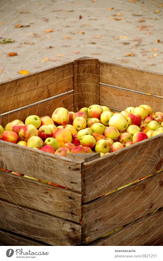 Freshly harvested apples in a wooden box Apple Fruit Organic produce Food Vegetarian diet Juice Autumn Nature naturally Juicy Sour cute Yellow Green
