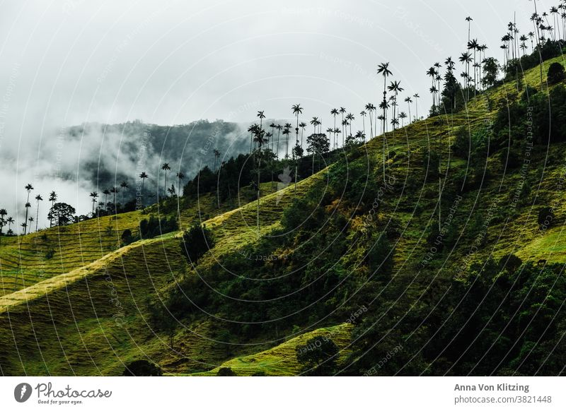 Cocora Valley - palm trees in the clouds palms Clouds Green Colombia cocora valley wax palms tropics Tropical vibrant green travel South American plants