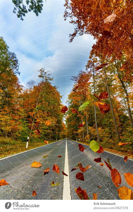 A straight country road through a typical colourful forest in autumn Forest, trees, nature, Autumn Country road variegated Nature autumn colours foliage