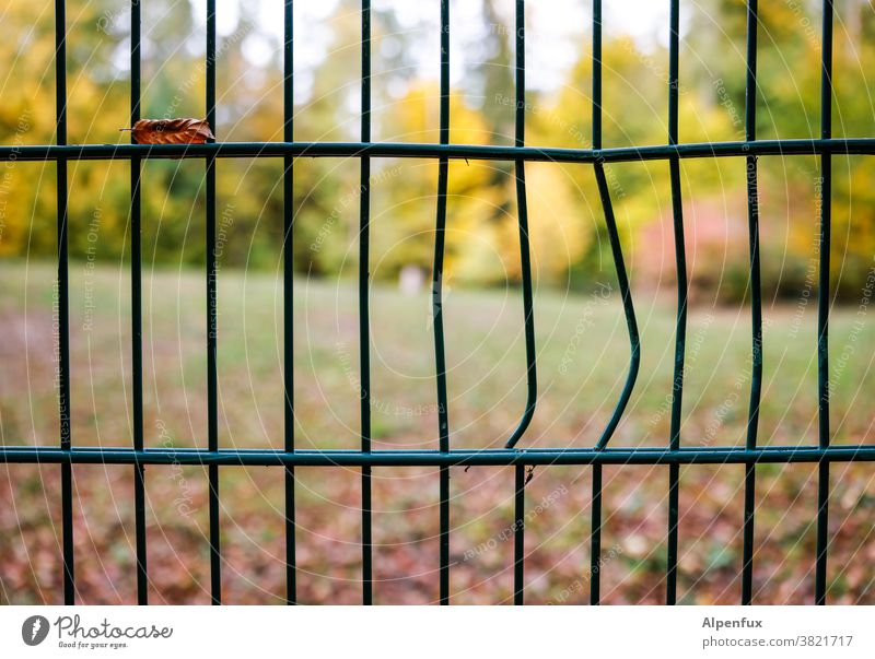 Autumn has broken out Fence Gap in the fence warped Colour photo Deserted Exterior shot Shallow depth of field Beautiful weather Light Day Garden Environment
