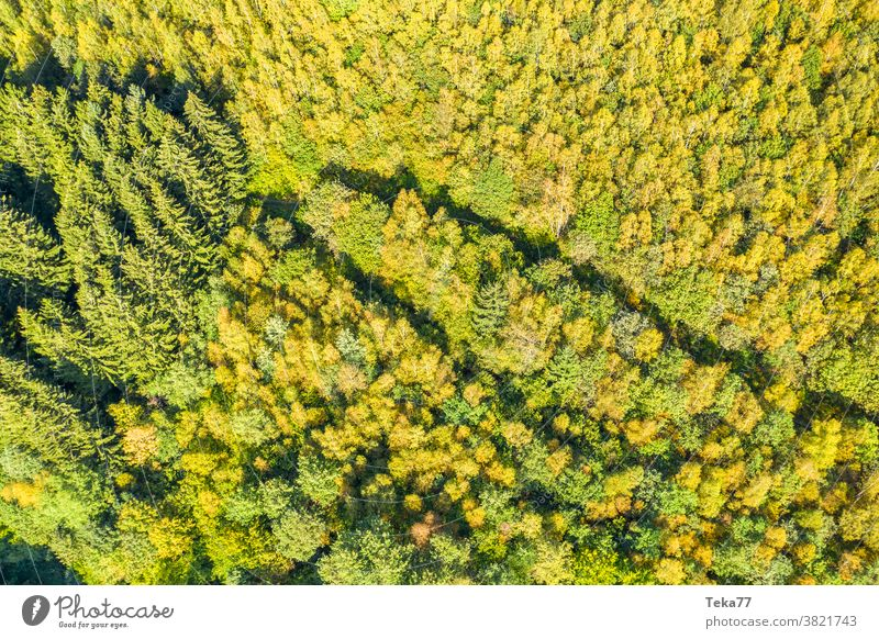 an autumn forest from above in the sun seasonal forest sunny tree trees mixed forest