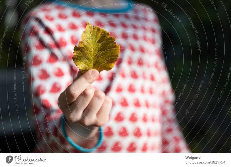 Autumn leaves in hand from child Child Infancy Hope variegated Yellow Red Blue foliage Leaf optimistic Grief sad Girl Human being Kindergarten Forest