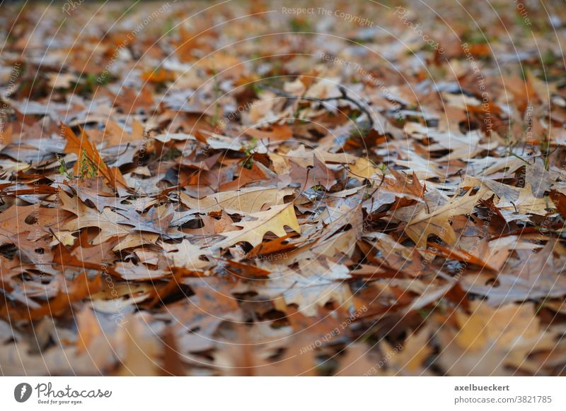 Autumn leaves Background Leaf Autumnal Nature background Ground Covered Woodground foliage Brown Autumnal colours Background picture Shallow depth of field