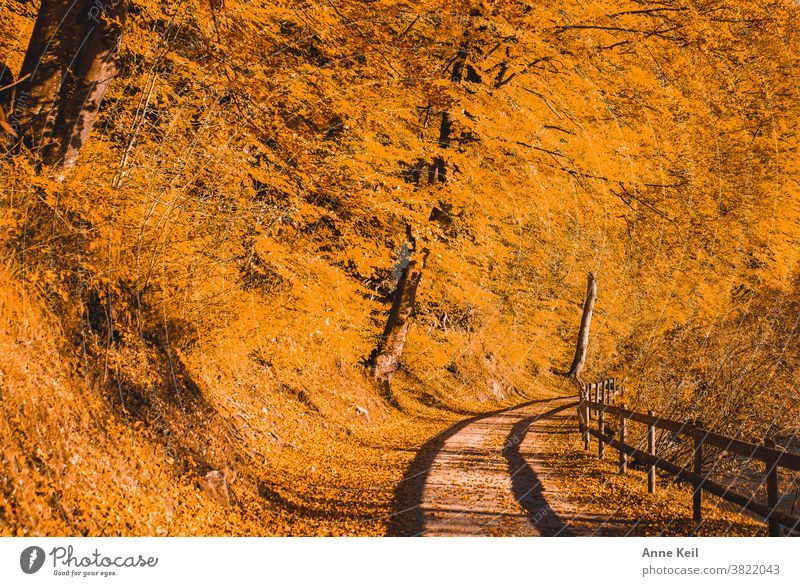 Autumn explosion in orange with shadow from the wooden railing on the hiking trail Autumn leaves Autumnal colours Exterior shot Yellow Leaf Colour photo