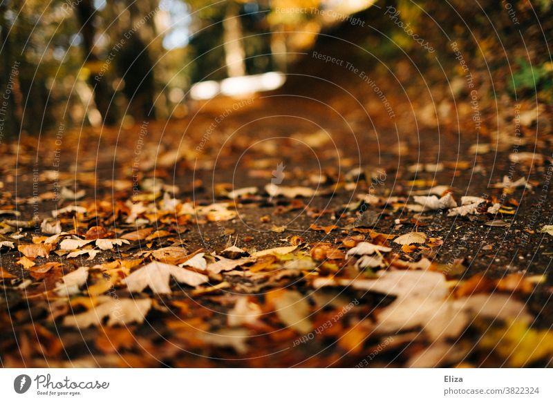 Forest soil with leaves in autumn Woodground foliage Autumn stroll golden autumn Nature variegated Autumnal Sunlight Autumn leaves