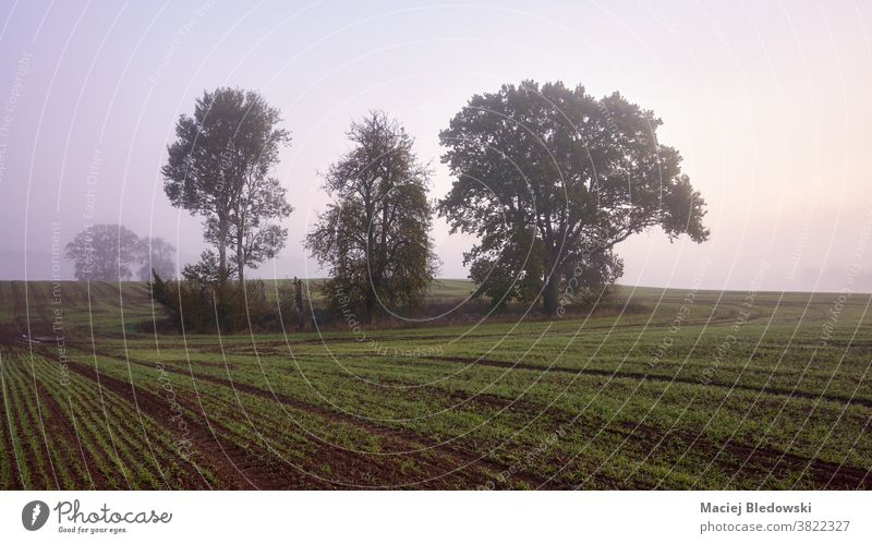 Rural foggy landscape with trees on a field at sunrise. rural nature scenery countryside sky no people view outdoor season autumn peaceful morning fall scenic