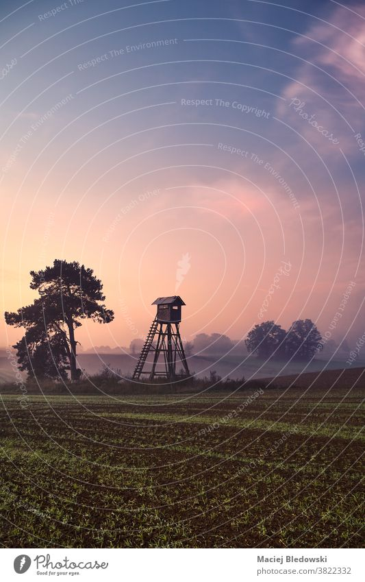 Rural foggy landscape with silhouette of a hunting tower on a field at sunrise. rural nature tree hunting pulpit dawn scenery hide blind countryside mist sky
