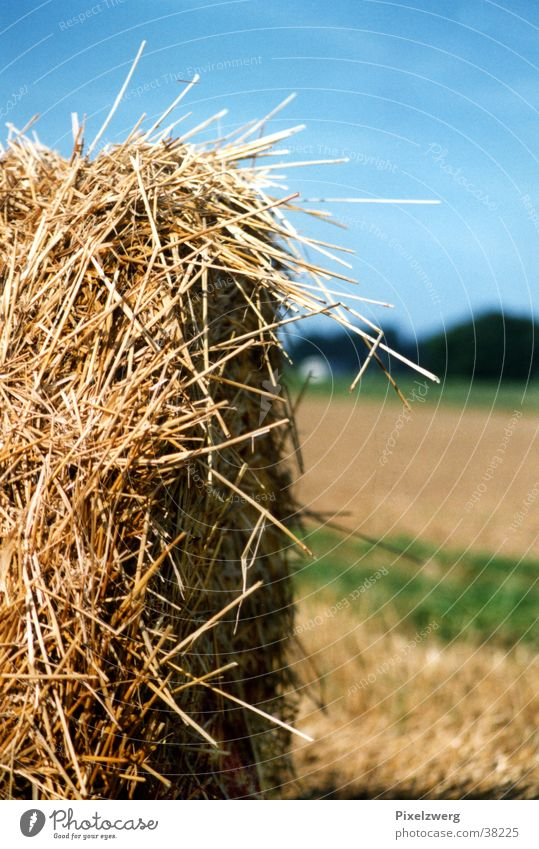 hay bales Hay bale Straw Agriculture Meadow Field Westerwald country air