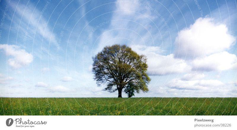 Sky Tree Summer Clouds Meadow Middle Rhineland-Palatinate Westerwald