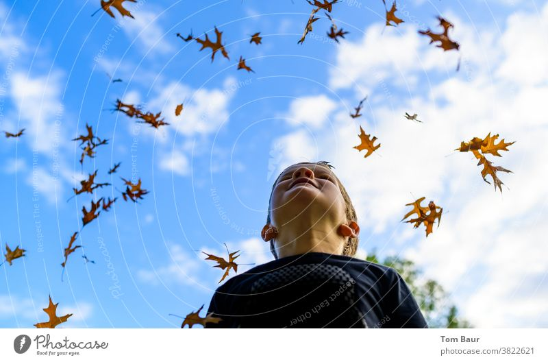 It's raining leaves Autumn leaves Child Boy (child) look up to the sky Blue sky Worm's-eye view Oak leaf leaves fall Autumnal autumn atmosphere Joy