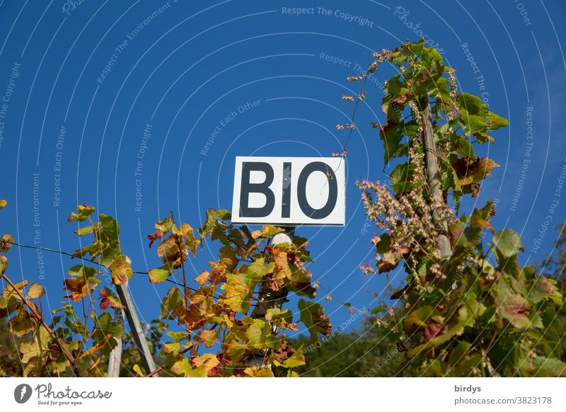 "Organic wine, sign with the inscription "" BIO "" in a vineyard, cloudless sky. Organic farming organic Organic wine growing Organic produce wingert Vine vines"