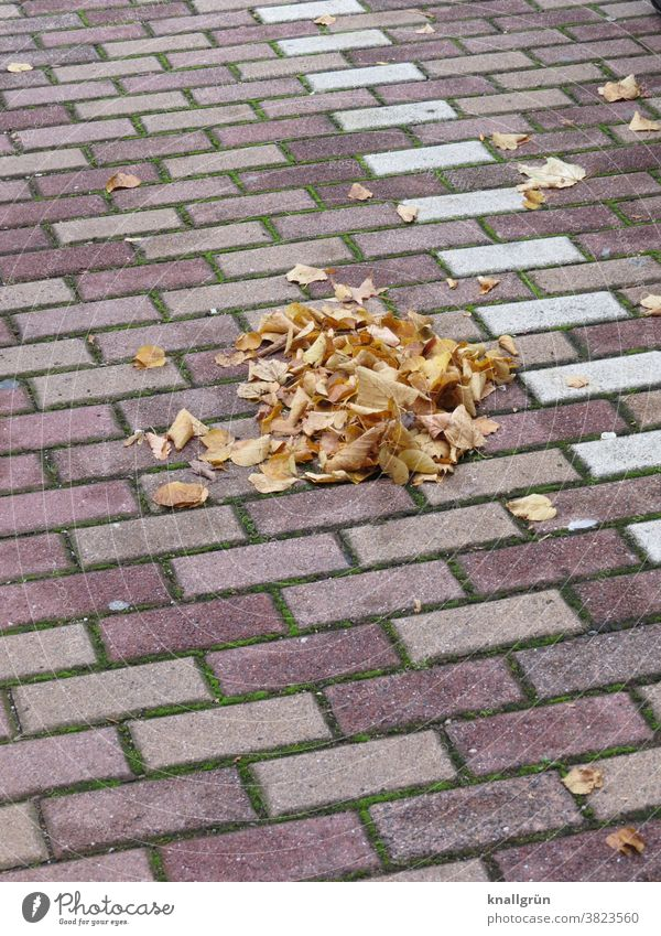 Small pile of leaves on a parking lot Autumn Heap Leaf Exterior shot Autumn leaves Day Autumnal colours Nature Deserted Colour photo Early fall Change