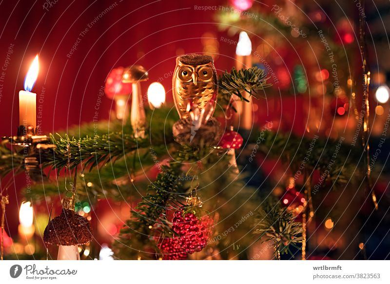 Owl on a Christmas tree Christmas tree decorations Decoration sparkle vacation Tree December Advent shoulder stand fortunate variegated Sphere Tinsel holidays