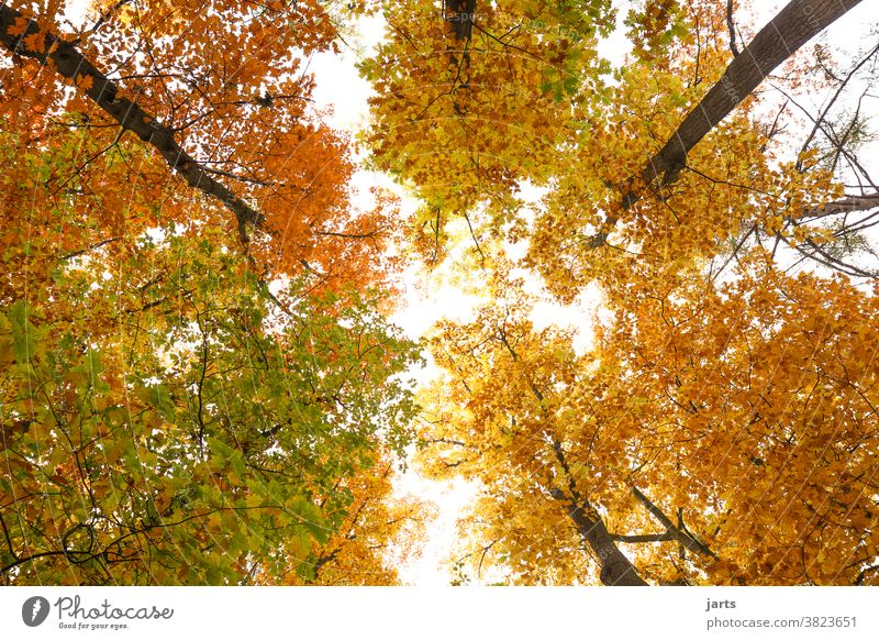 autumn sky Autumn Sky trees Forest leaves variegated Deciduous tree Nature Tree Landscape Leaf Exterior shot Environment Deserted Colour photo naturally Light