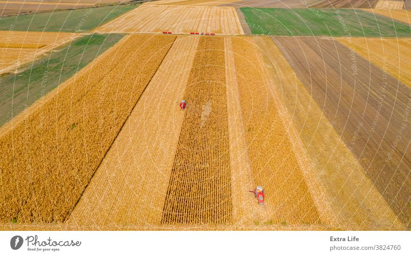 Aerial view of two combines, harvester machines are harvest ripe maize Above Agricultural Agriculture Agronomy Cereal Combine Corn Cornfield Country Crop
