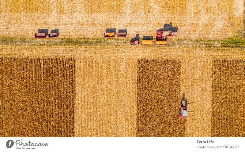 Above top view on team of agricultural harvesters as they are harvesting mature corn on farm field, cornfield Aerial Agricultural Agriculture Agronomy Cargo