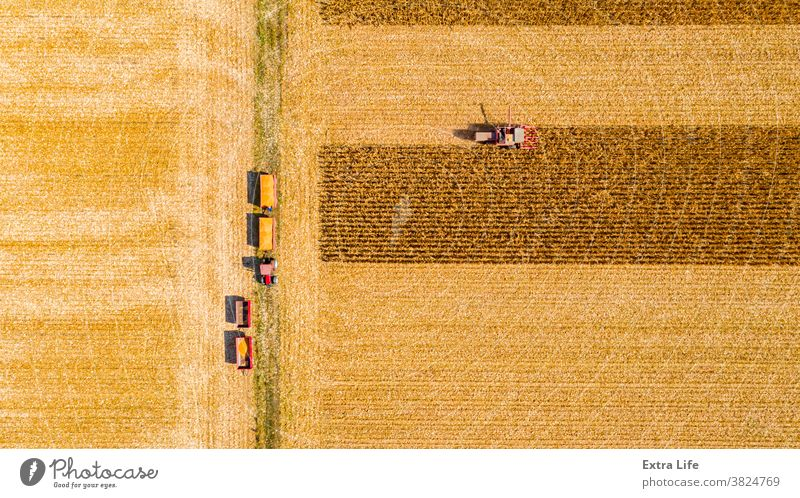 Above view on combine, harvester machine, harvest ripe maize Aerial Agricultural Agriculture Agronomy Cereal Combine Corn Cornfield Country Crop Cultivated