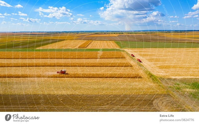 Aerial view of combine, harvester machine harvest ripe maize Above Agricultural Agriculture Cereal Cloudscape Combine Corn Cornfield Country Crop Cultivated