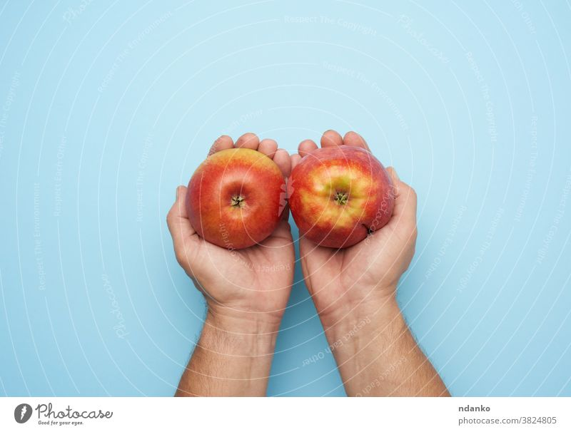 two male hands hold a ripe red apple on a blue background adult arm closeup diet food fresh freshness fruit give giving harvest health healthy human juicy