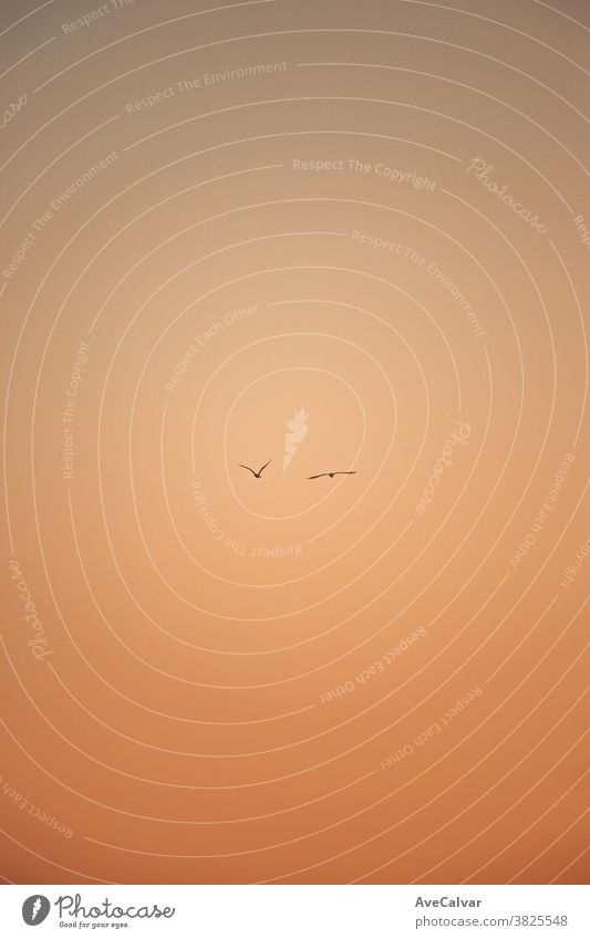 A minimalistic shot of two seagulls flying during the sunset wing ocean bird white beak water nature animal sky flight concept rest rain food river beach