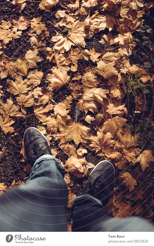 Autumn walk man in jeans walks on leaf-covered path Bird's-eye view Colour photo Exterior shot Leaf Autumnal Autumn leaves Brown Multicoloured Autumnal colours