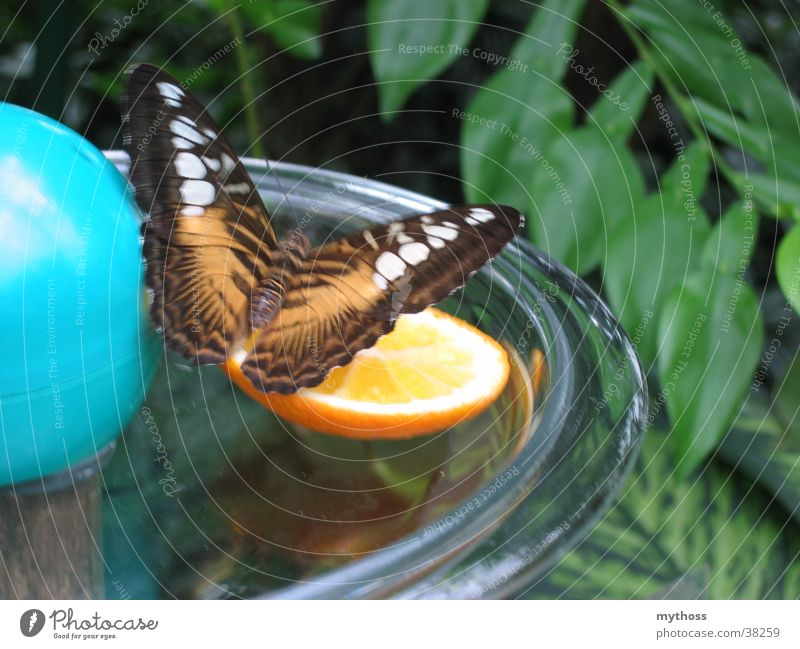 Nature Green Animal Orange Flying Transport Butterfly