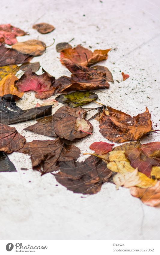 Autumn foliage on light background leaves Brown Green Yellow Red Autumn leaves Wet Autumnal Nature Autumnal colours Leaf Colour photo Exterior shot Deserted