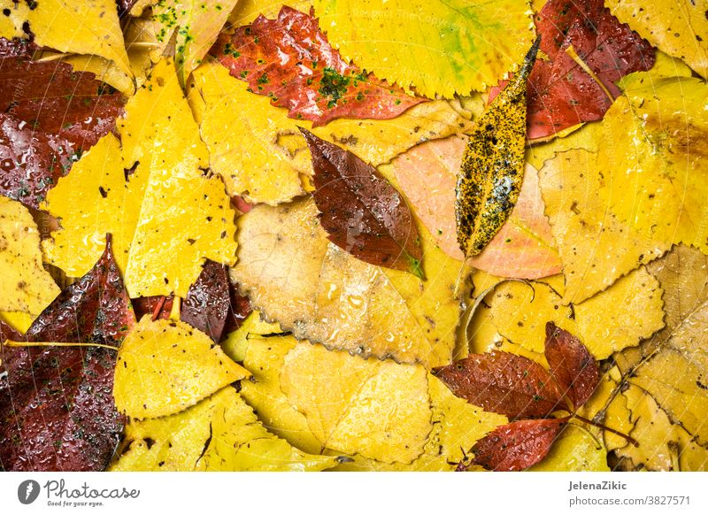 Colorful autumn background leaf nature fall frame yellow brown red green season texture design natural september wallpaper nobody plant seasonal maple surface