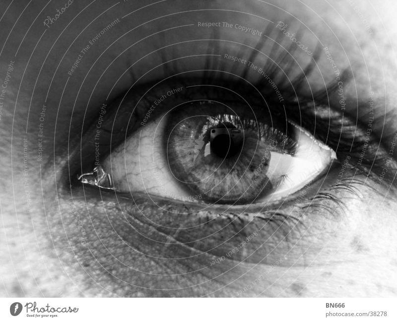 Woman Eyes Feminine Clarity