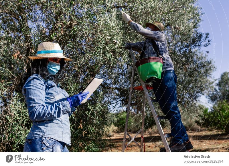 Farmers working in plantation during harvest season woman farm fruit agriculture using tablet garden horticulture protect coronavirus covid covid19 covid 19