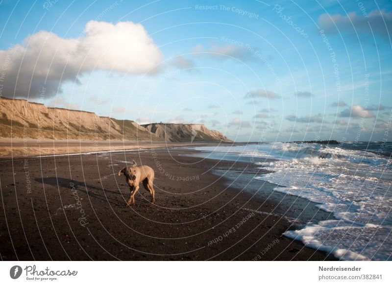 Dog Sky Nature Summer Ocean Loneliness Landscape Animal Clouds Beach Far-off places Lanes & trails Freedom Waves Wind Elegant