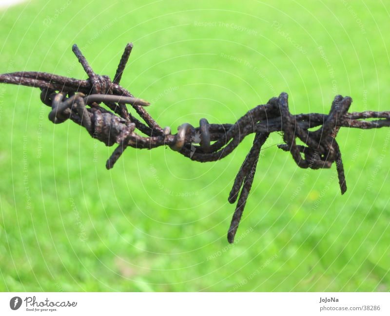 Rust Historic Thorn Barbed wire Concentration camp Auschwitz-Birkenau