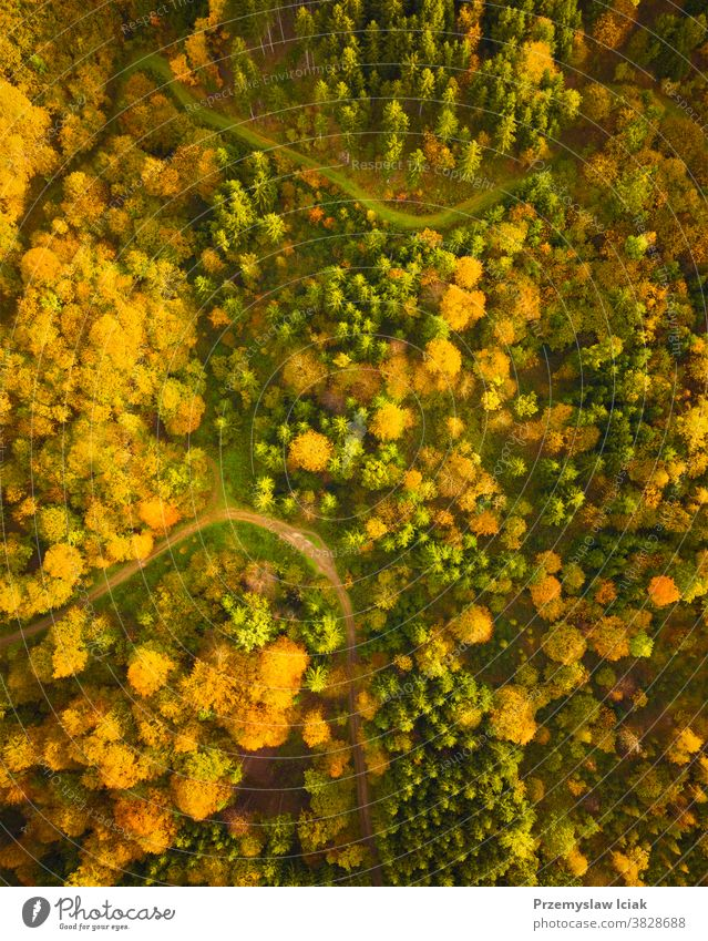 Aerial view of autumn forest in South styrias Green hart of Austria background tree South Styria woods Alpine nature topview leaf colorful landscape hiking fall