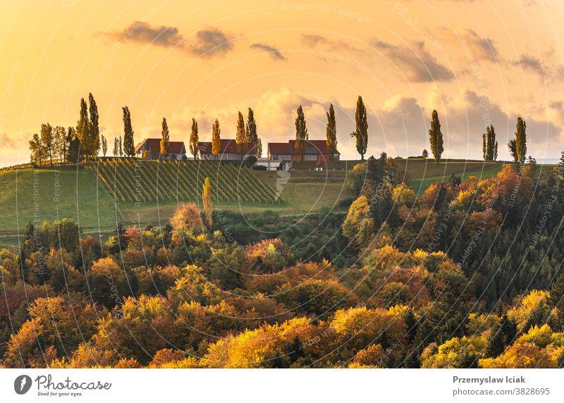 South styria vineyards landscape, Tuscany of Austria. Sunrise in autumn. background orange wine nature sun tuscany rebenland gamlitz wine street travel tourism