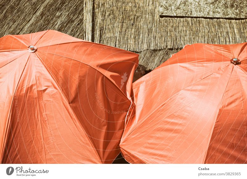 High angle view of orange colored umbrellas parasol open colorful object high angle view closeup sunny close-up outdoors protection protective summer sunshade